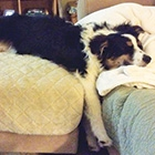 Napping-Thumbnail