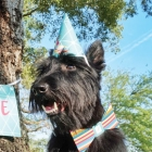 Is Your Dog a Party Pup?