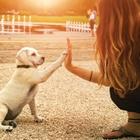 PerfectPuppy-Thumbnail