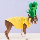 Pineapple Puppy
