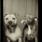 Pit Bull Photobooth