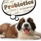 Probiotics-Thumbnail