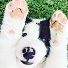 Puppies-Thumbnail