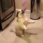 Puppy learning to catch