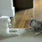 Cat teaches dog how to roll over