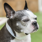 Pet Talk: Be On The Lookout For Vision Impairment In Pets