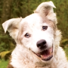 4 Things You Should Be Doing For Your Senior Dog