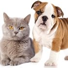Pet Talk: The Benefits of Spaying and Neutering