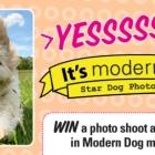Star Dog Contest
