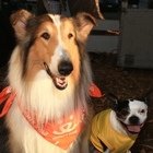 """Hector and the Search for Happiness"" Dog-Star Luna Struts her Stuff at Strut Your Mutt"