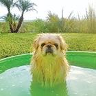 SummerInspo-Thumbnail