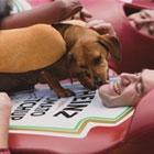 Heinz: Wiener Stampede