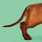 Wiener