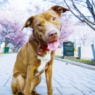 Dogs Give New Leash on Life To Abandoned Cemetery