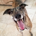 Greyhounds In Need Of Homes