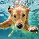 can all dogs swim