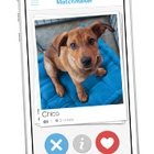 Puppy Love on Tinder
