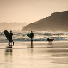 Travelling to Tofino with your dog, a super dog friendly place for a vacation.