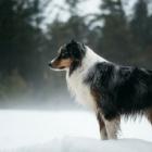 Juneau Winter Wonderland Dog
