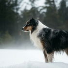 Juneau Winter Wonderland Dog