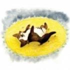 WhyDoesMyDog-roll-on-carpet-sm.jpg