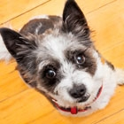 Help Furry Friends Beat the Back-to-School Blues
