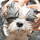 DIY Green Doggie Shampoo