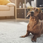 Does your Dog have Arthritis?