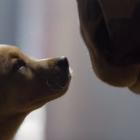 Budweiser Super Bowl XLVIII Commercial