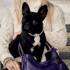 """COACH Pups"" Campaign Unveiled ""COACH PUPS"" Campaign Unveiled"