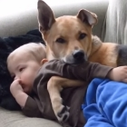 Toddler and Dog Cuddle on the Couch