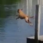 Video of the Day: Dog Jumping Into Lake In Slow-Motion