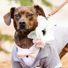 dog weddings