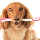 Pet Talk: Pet Dental Health Month