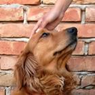 Choosing a Dog Trainer