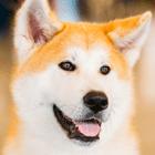 DIY Dry Shampoo For Dogs