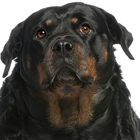 How to Prevent Obesity In Pets