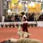 This Dog Likes to Move It, Move It