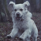 Howling Dogs thumbnail