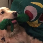 Gumby comes to life