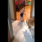 Bouncing Baby Plays With Shadow Loving Dog