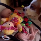 Video of the Day: This Guilty Dog Makes Amends