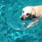 Video of the Day: Dogging Around in a Pool