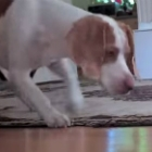 Video of the Day: Puppy Takes On A Robot Crab