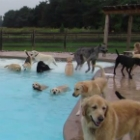 Video of the Day: Adorable Doggy Pool Party