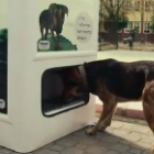 Video of the Day: This Amazing Machine is Helping Feed Stray Dogs