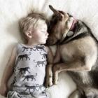 Adorable Nap-Time Buddies