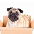 How to Make Moving Easier on Your Dog