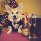 Dogs Who Are So Ready to Celebrate New Year's Eve