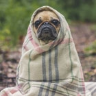 Finding Wellness Naturally with Homeopathy for Pets